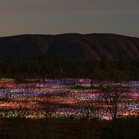 Field of Lights Uluru